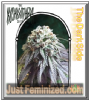 Kush Brothers The Dark Side Female 3 Weed Seeds
